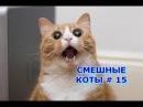Приколы с кошками и котами 15. Подборка смешных и интересных видео с котиками и к ...
