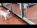 Собака радуется что ее забрали домой из приюта we took a dog from a shelter