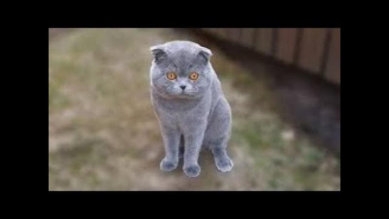 Две кошки моют друг друга прикол Взаимная подписка секс большая собаки кошки давалки