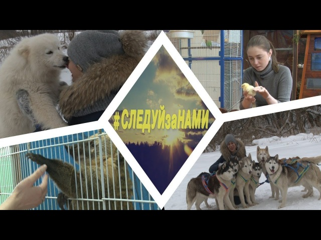 Следуйзанами. Эпизод 15: Спасение цыпленка и поцелуй с собаками