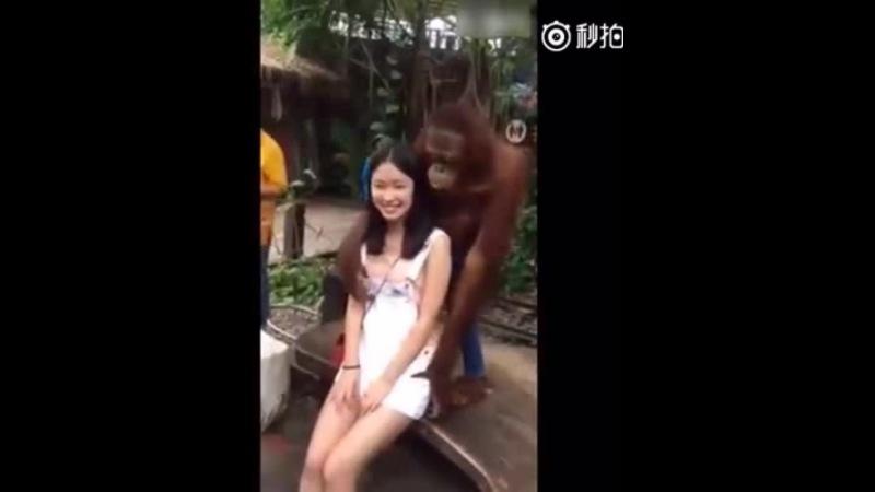 Chimpanzee likes asian girls · coub коуб