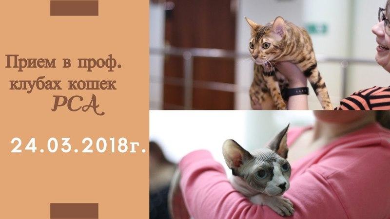 Прием в проф. клубах кошек PCA 24.03.2018г