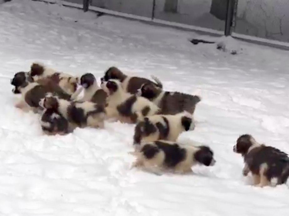 Минобороны поздравило россиян с Новым годом видеороликом со щенками