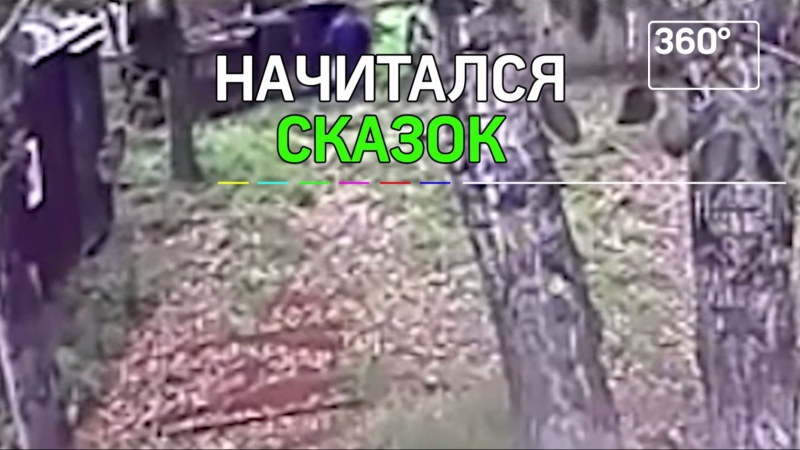 Медведи оторвали руку пьяному мужчине