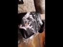 Балетки розовые, сумочка Катерина, цепочка с подвеской сидни, браслет и подвеска