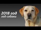 Год собаки. Поздравление с наступающим 2018 годом.