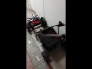 сравнивали коляски шенма и Голден Беби