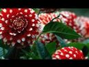 волшебство цветов.mp4