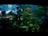 шоу с акулами
