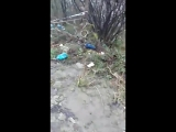 На Пластунской улице люди не понимают куда кидать мусор )))