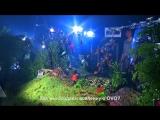 Проекции в шоу OVO от Cirque du Soleil