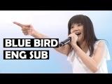 Ikimono Gakari - Blue Bird Eng Sub LIve 2016 Jimoto de Show