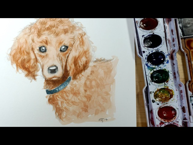 How to draw and paint a dog Poodle with watercolor