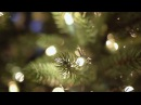Beachfront B-Roll: Christmas Tree Bokeh (Free to Use HD Stock Video Footage)