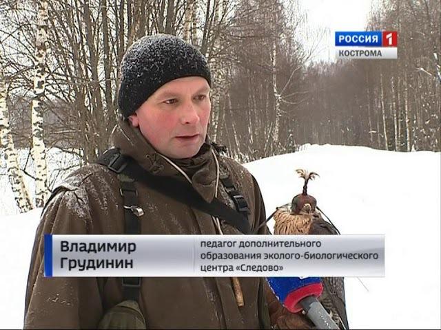 В Костроме возрождают соколиную охоту