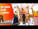 Рекламные фигуры для продвижения цирка 🌟 Студия объемной рекламы