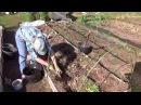 Подготовка грядки для посадки перца и баклажан.