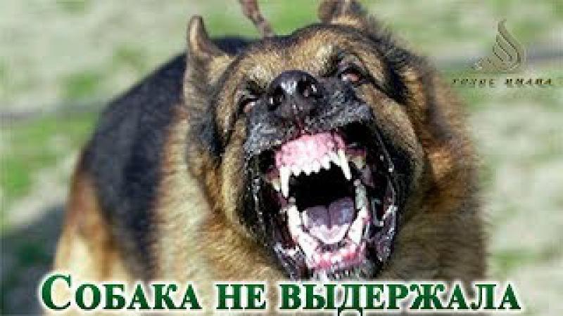 Собака не выдержала┇Даже переводчик плакал...