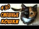 Коты Приколы с Котами ДО СЛЁЗ Смешные Кошки 2017