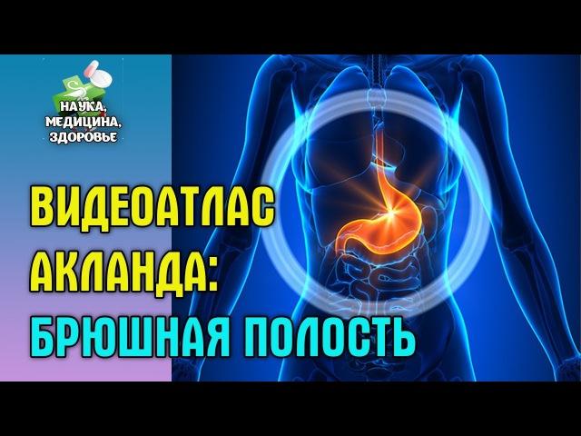 Анатомия человека. Видеоатлас доктора Акланда. Брюшная полость