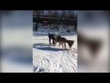 В Самаре на Волге спасатели спасли провалившуюся под лёд лошадь