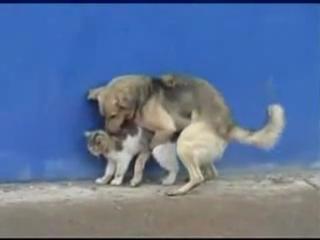 собака трахал кошка