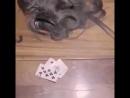 Везде один обман, игра в карты на раздевание)