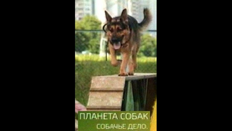 Собачье дело_Планета собак_Площадка Brateevodog