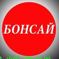 Бонсай. Доставка суши в Одессе