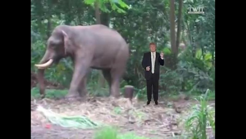 Trump a abrogé l'interdiction de l'ère Obama permettant aux gens d'apporter des trophées d'éléphants aux États-Unis. Qu'en pense