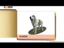 Карточки Домана Породы собак часть 1