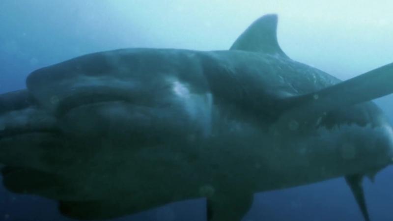Нападение пятиглавой акулы / 5 Headed Shark Attack (2017) / Horror, Sci-Fi / ENG / 1080p