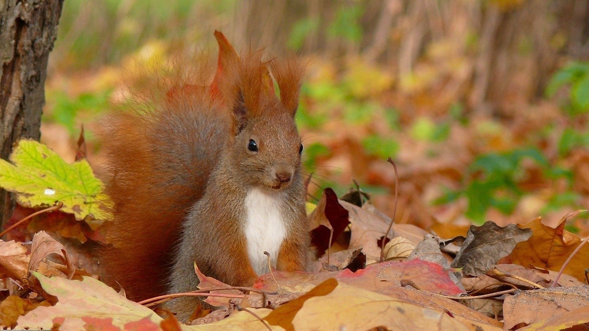 Осень, веселье, треш, угар, печаль, беда, сопли, гайморит, температура, радость.