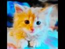 Детство кота Рыжика))