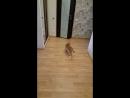 Юджин и мышка