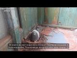 Pigeons - Very beautiful story of love pigeon - Pigeon Saga - 1 series