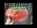 Осенние грибы Грибы в октябре Тещин язык