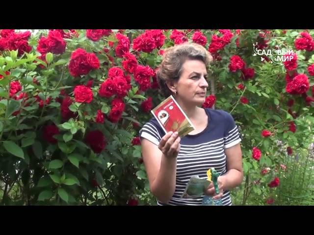 Защита растений от насекомых вредителей. Сайт Садовый мир