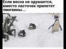 Если весна не одумается вместо ласточек прилетят пингвины