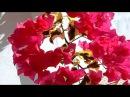 Bougainvillea вечнозеленая лиана бугенвиллия яркие краски осени Испания 14 24 09 2017