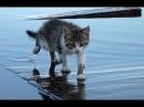 Смешные кошки до слез Смешное видео до слез 2018 12 Котики Без монтажа