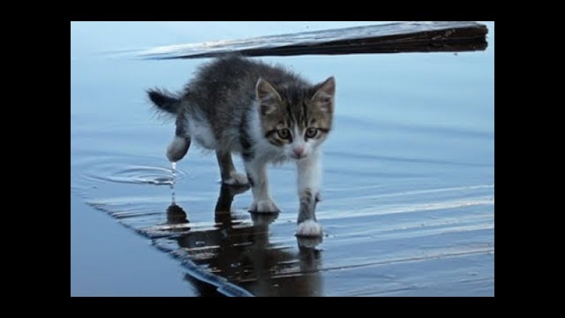 Смешные кошки до слез Смешное видео до слез 2018 12 (Котики Без монтажа)