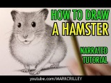 How to Draw a Hamster Animal Tutorial #15