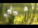 Alexander Glazunov - Spring, Op 34 - YouTube