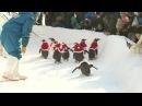 China Penguins bring happiness to northeast China city