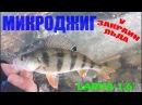 Fanatik Larva 1 6 Ловля окуня на спиннинг Зимний спиннинг Микроджиг