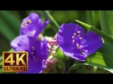 4K Flowers - Summer Wildflowers Bouquet 2 Hours Summer Relax Video