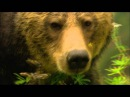 Austin Stevens Adventures - Season 1, Episode 1 Grizzly Bears