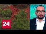 Вандалы украли деревья с мемориала погибшим в авиакатастрофе над Синаем - Росси ...