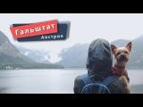Гальштат — маленький австрийский рай / Woof travel (Путешествия с собакой на автомобиле)